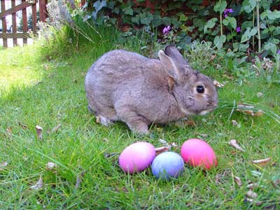 Where Did The Idea Of The Easter Bunny Come From ?